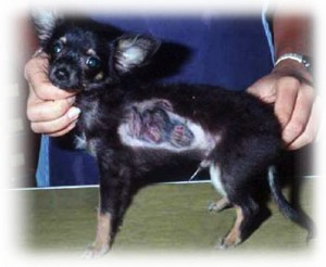 dog ringworm pictures