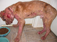 Justice Before mange treatment