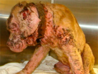 Justice with mange symptoms