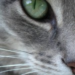 Sweet cat cured of mange and healthy again